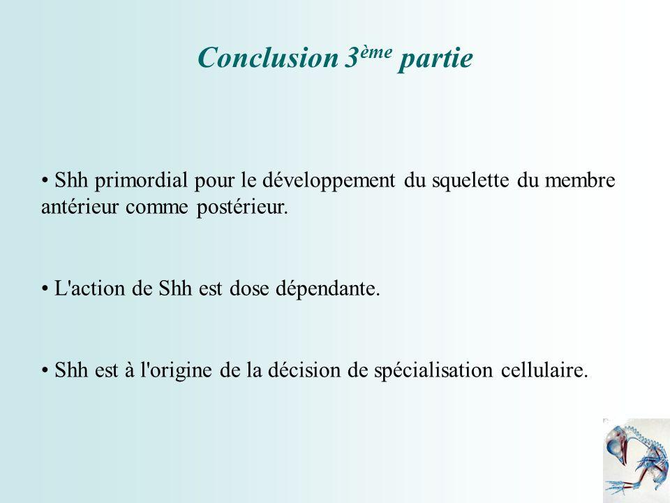 Conclusion 3ème partie Shh primordial pour le développement du squelette du membre antérieur comme postérieur.