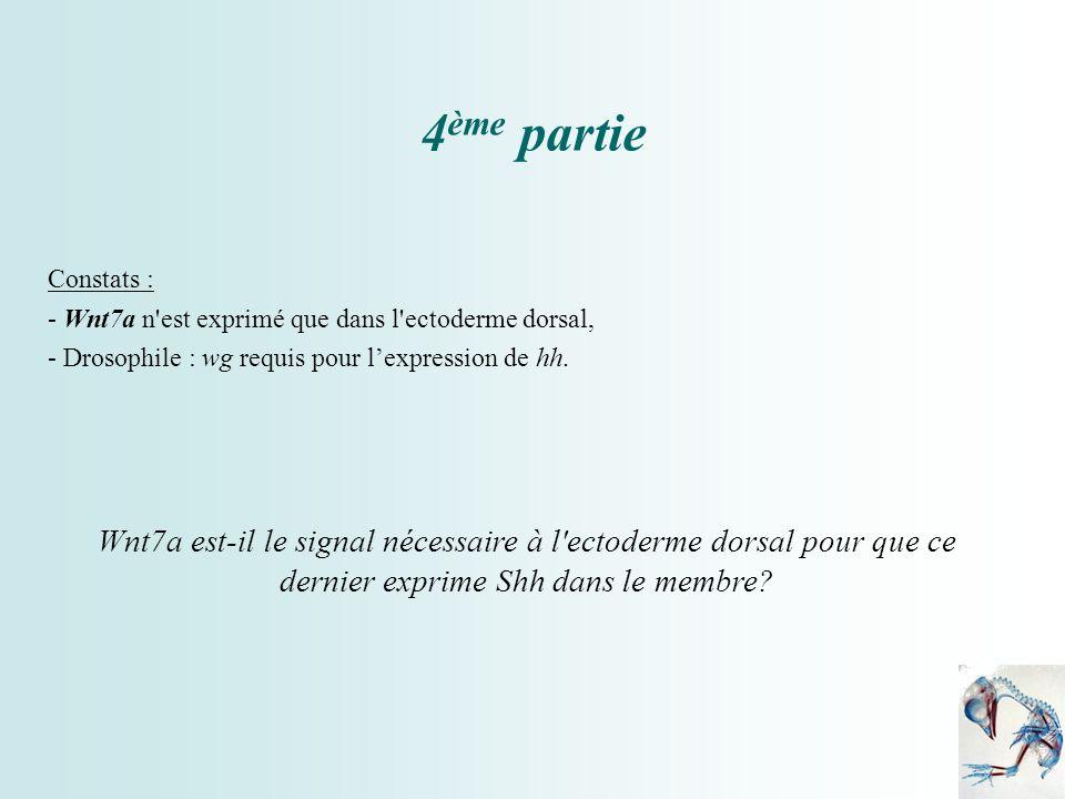 4ème partie Constats : - Wnt7a n est exprimé que dans l ectoderme dorsal, - Drosophile : wg requis pour l'expression de hh.