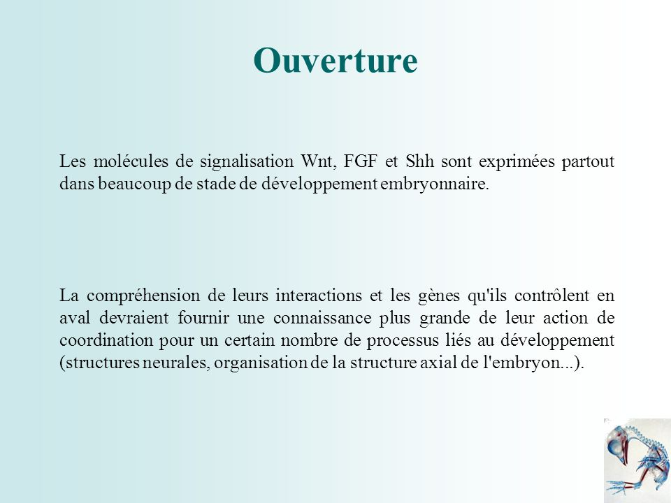 Ouverture Les molécules de signalisation Wnt, FGF et Shh sont exprimées partout dans beaucoup de stade de développement embryonnaire.