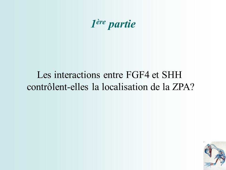 1ère partie Les interactions entre FGF4 et SHH