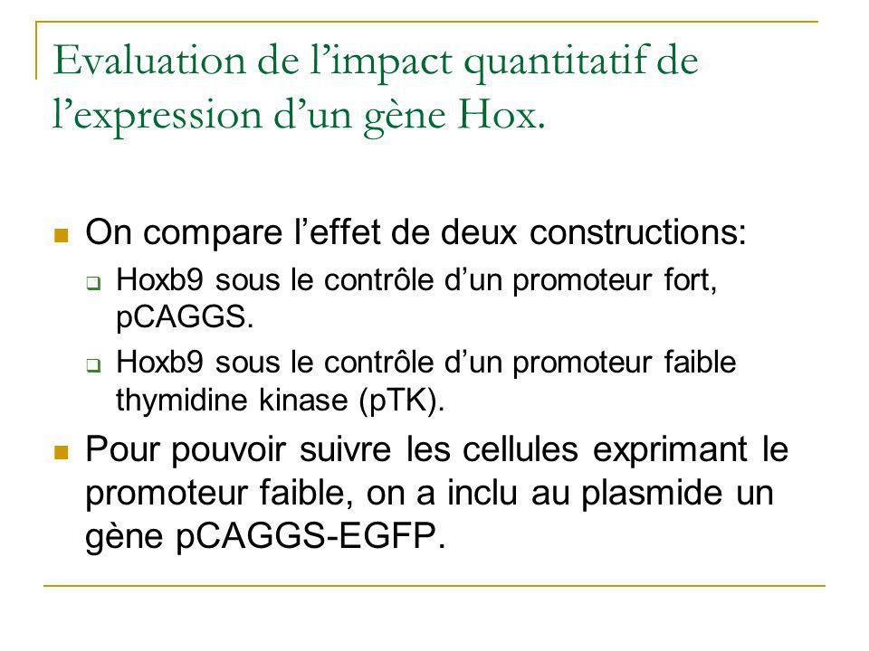 Evaluation de l'impact quantitatif de l'expression d'un gène Hox.