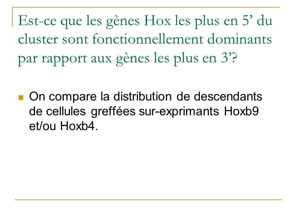 Est-ce que les gènes Hox les plus en 5' du cluster sont fonctionnellement dominants par rapport aux gènes les plus en 3'