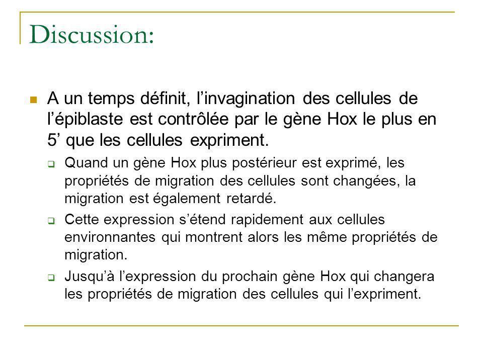Discussion: A un temps définit, l'invagination des cellules de l'épiblaste est contrôlée par le gène Hox le plus en 5' que les cellules expriment.