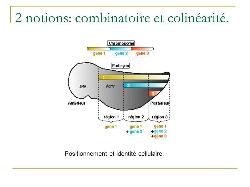 2 notions: combinatoire et colinéarité.