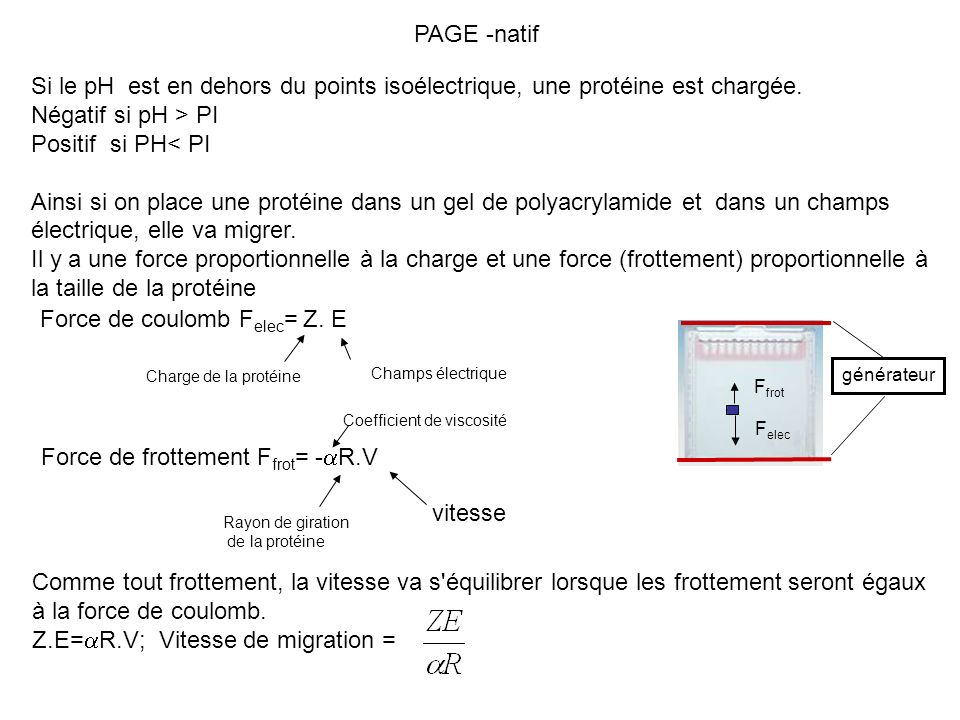 Force de coulomb Felec= Z. E