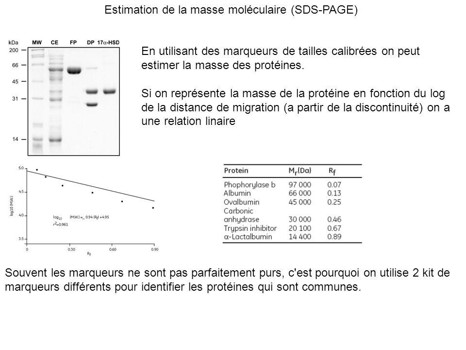 Estimation de la masse moléculaire (SDS-PAGE)