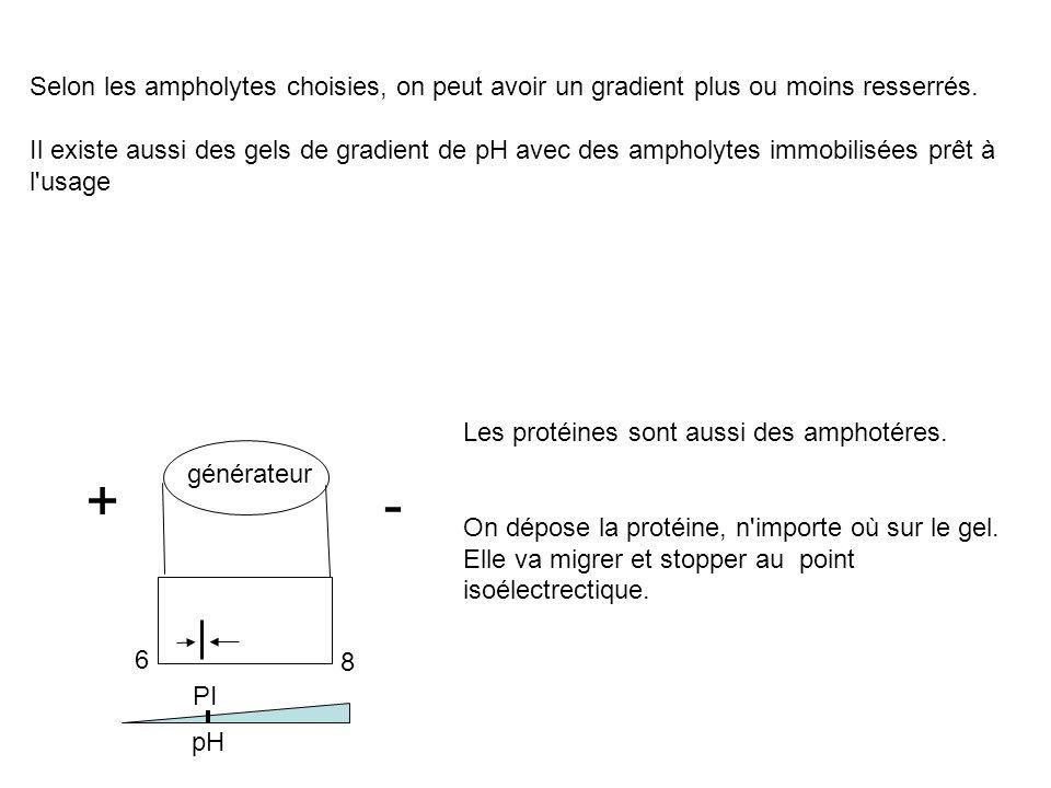 Selon les ampholytes choisies, on peut avoir un gradient plus ou moins resserrés.