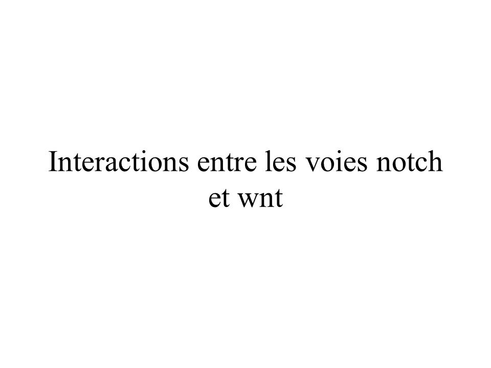 Interactions entre les voies notch et wnt