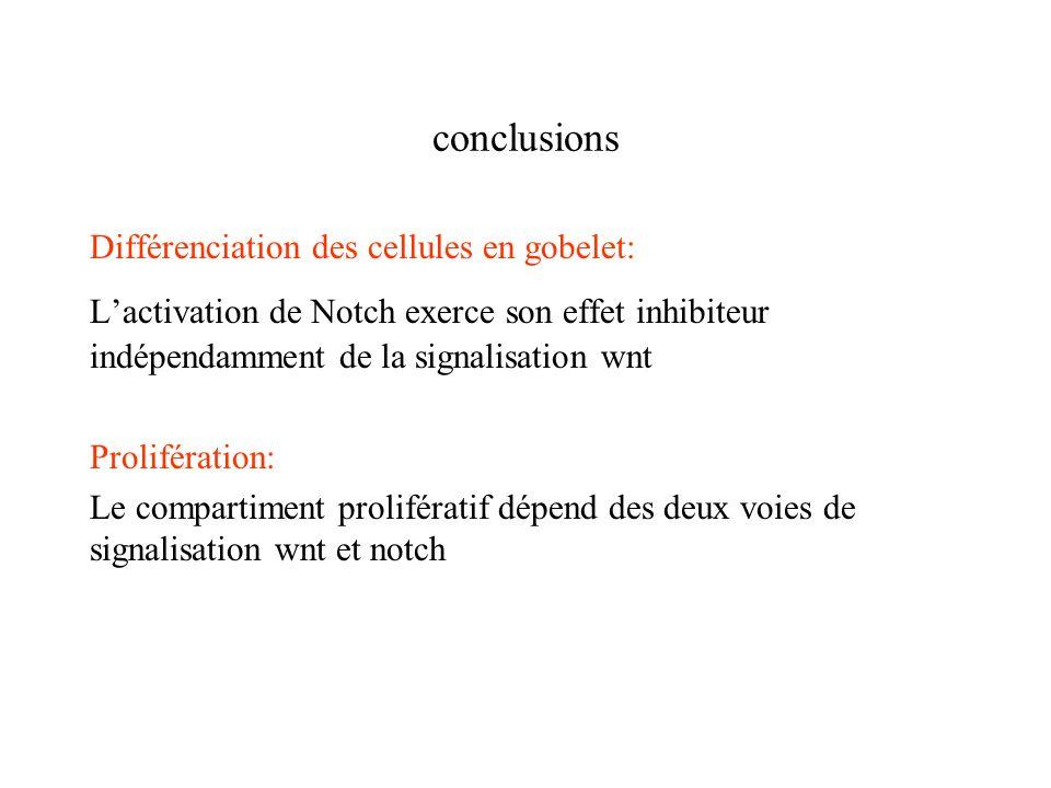 conclusions Différenciation des cellules en gobelet: