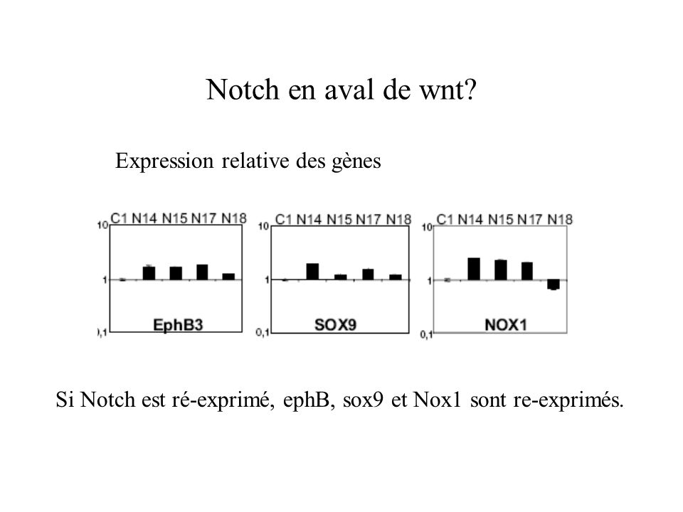 Notch en aval de wnt Expression relative des gènes