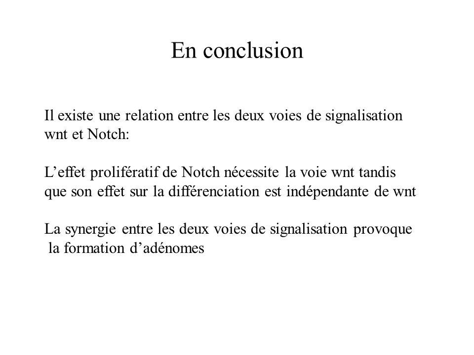 En conclusion Il existe une relation entre les deux voies de signalisation. wnt et Notch: