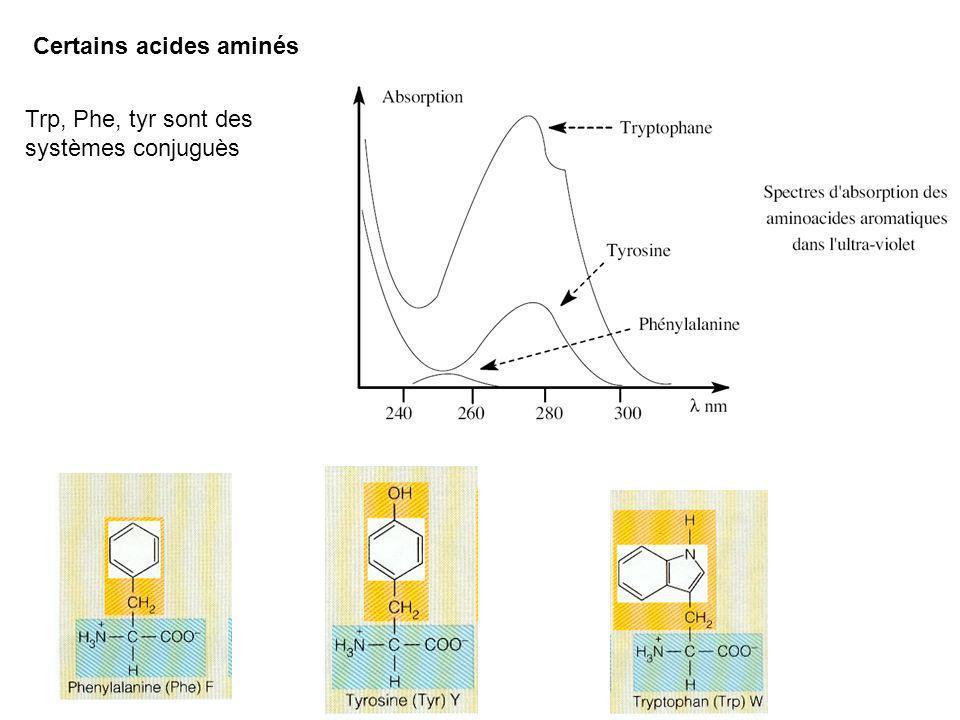 Certains acides aminés