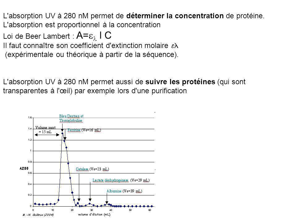 L absorption UV à 280 nM permet de déterminer la concentration de protéine. L absorption est proportionnel à la concentration