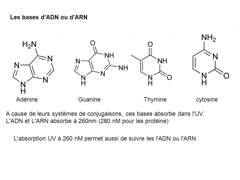 Les bases d ADN ou d ARN Adénine. Guanine. Thymine. cytosine. A cause de leurs systèmes de conjugaisons, ces bases absorbe dans l UV.
