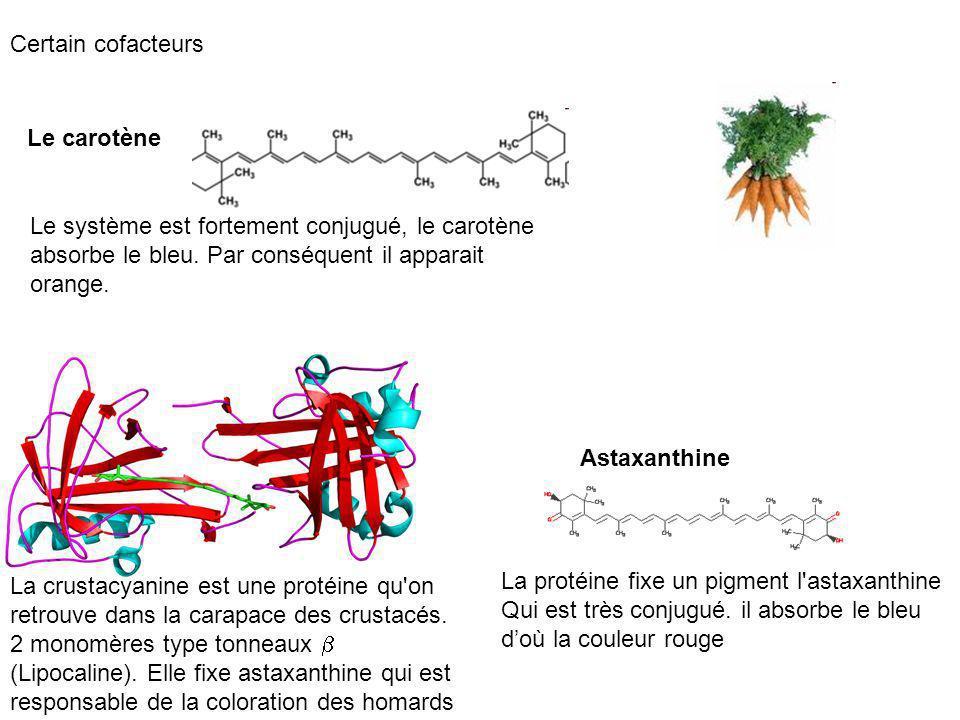Certain cofacteurs Le carotène. Le système est fortement conjugué, le carotène absorbe le bleu. Par conséquent il apparait orange.