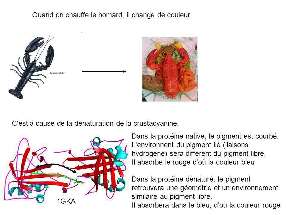Quand on chauffe le homard, il change de couleur
