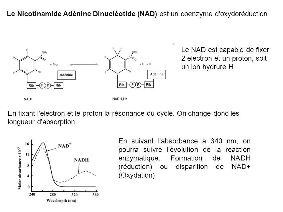 Le Nicotinamide Adénine Dinucléotide (NAD) est un coenzyme d oxydoréduction