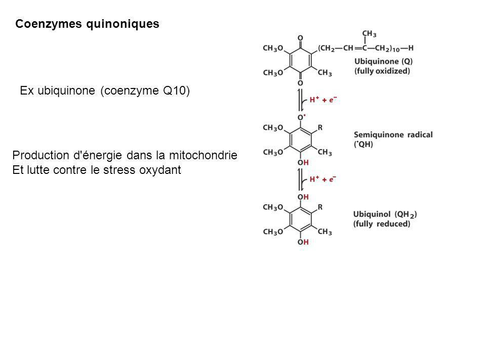 Coenzymes quinoniques