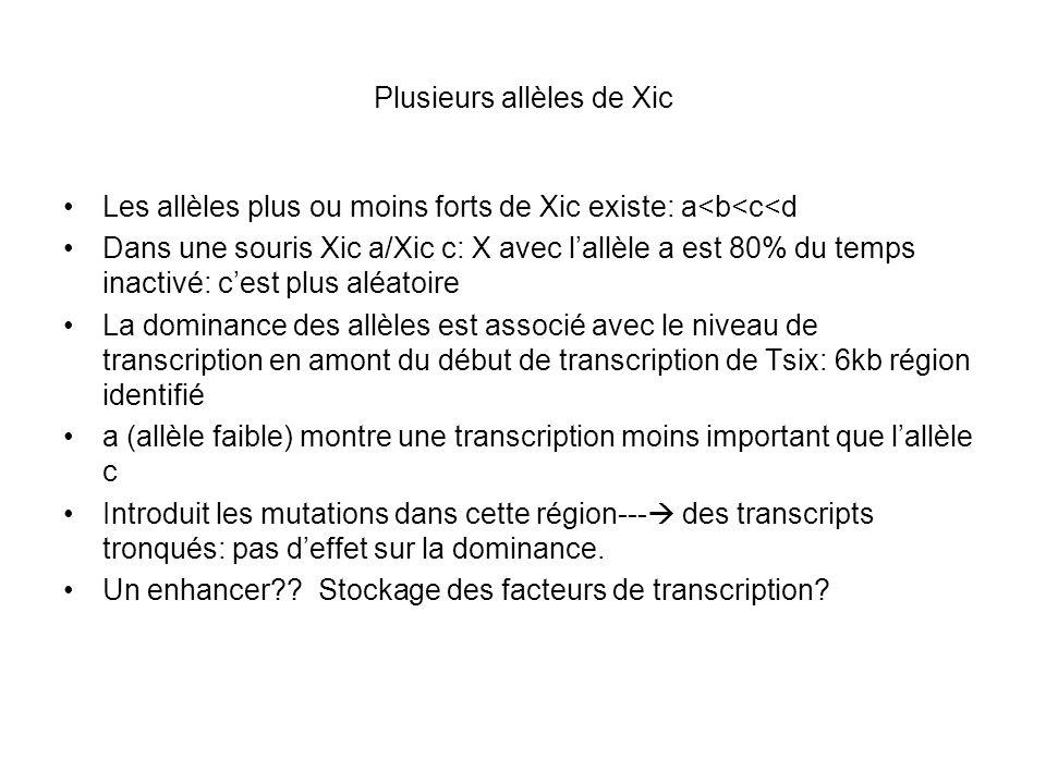 Plusieurs allèles de Xic