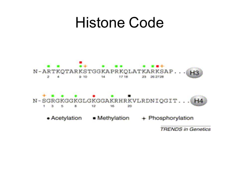Histone Code