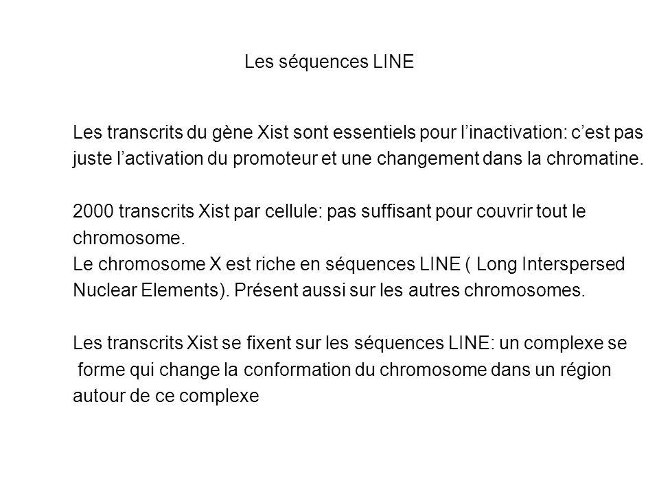 Les séquences LINE Les transcrits du gène Xist sont essentiels pour l'inactivation: c'est pas.