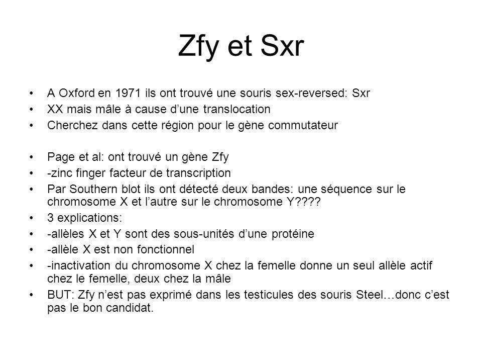 Zfy et Sxr A Oxford en 1971 ils ont trouvé une souris sex-reversed: Sxr. XX mais mâle à cause d'une translocation.