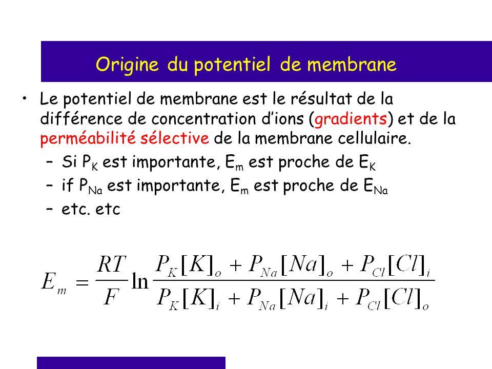 Origine du potentiel de membrane