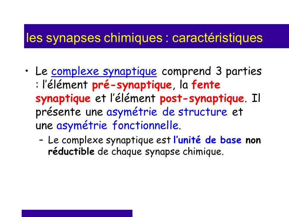 les synapses chimiques : caractéristiques