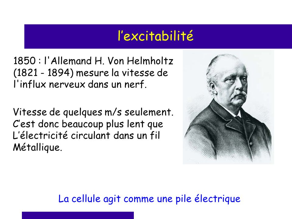 l'excitabilité 1850 : l Allemand H. Von Helmholtz (1821 - 1894) mesure la vitesse de l influx nerveux dans un nerf.