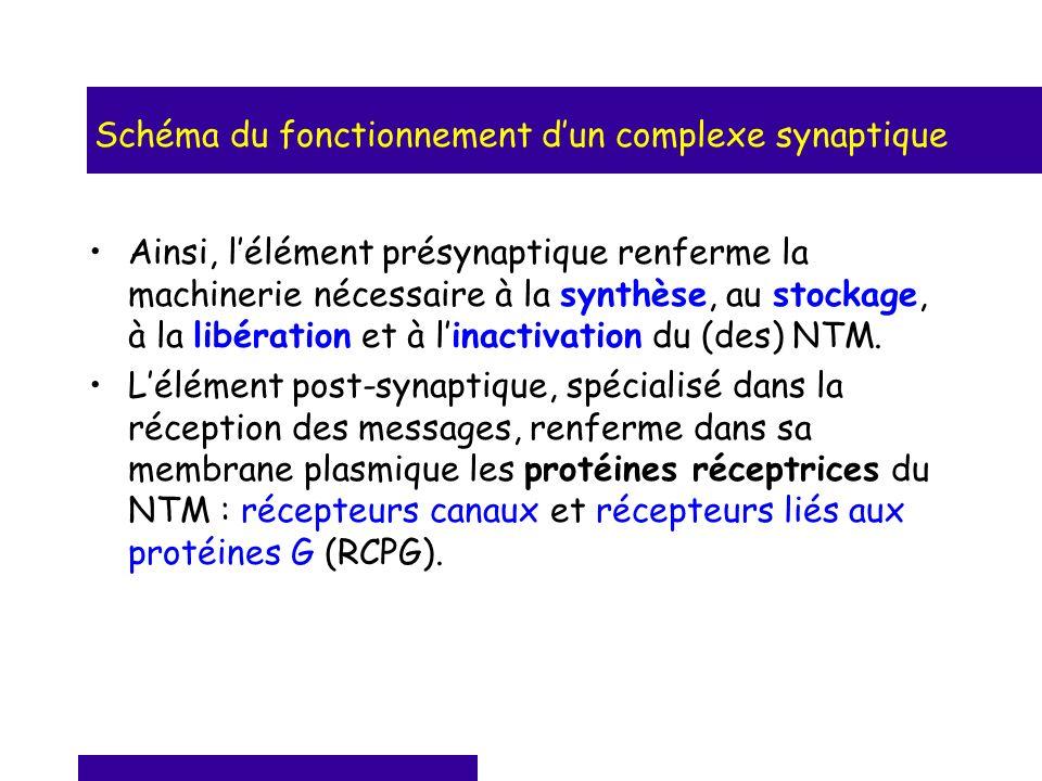 Schéma du fonctionnement d'un complexe synaptique