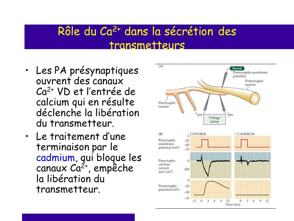 Rôle du Ca2+ dans la sécrétion des transmetteurs