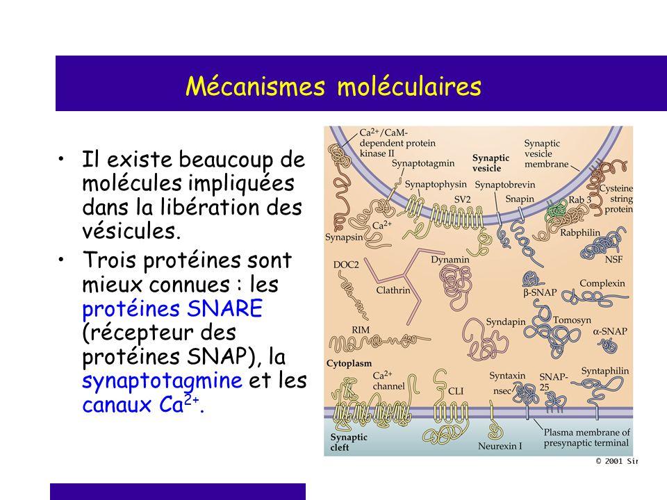 Mécanismes moléculaires