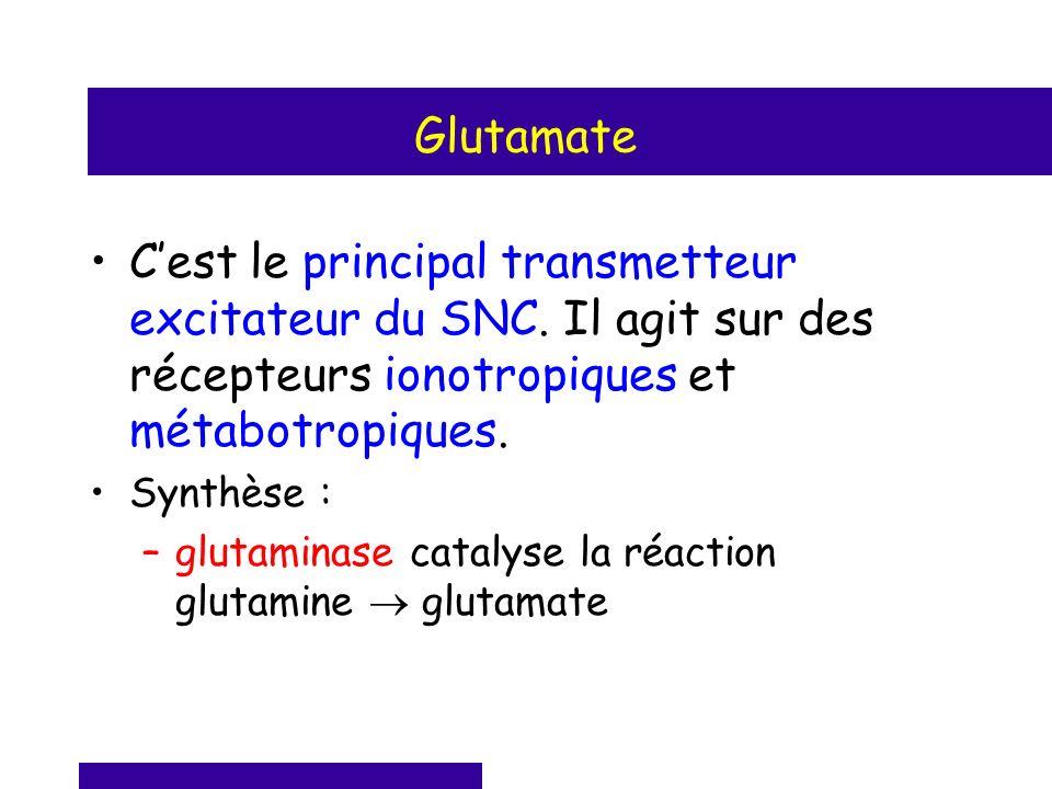 Glutamate C'est le principal transmetteur excitateur du SNC. Il agit sur des récepteurs ionotropiques et métabotropiques.