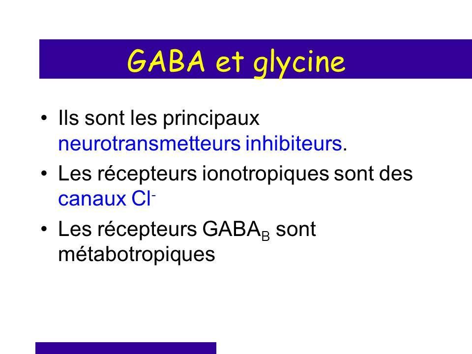 GABA et glycine Ils sont les principaux neurotransmetteurs inhibiteurs. Les récepteurs ionotropiques sont des canaux Cl-