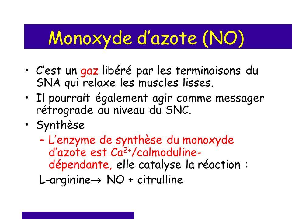 Monoxyde d'azote (NO) C'est un gaz libéré par les terminaisons du SNA qui relaxe les muscles lisses.