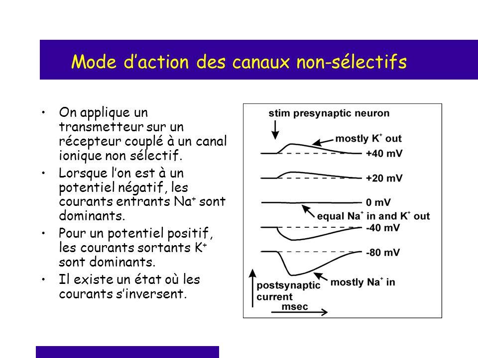 Mode d'action des canaux non-sélectifs