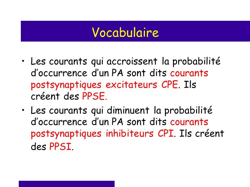 Vocabulaire Les courants qui accroissent la probabilité d'occurrence d'un PA sont dits courants postsynaptiques excitateurs CPE. Ils créent des PPSE.