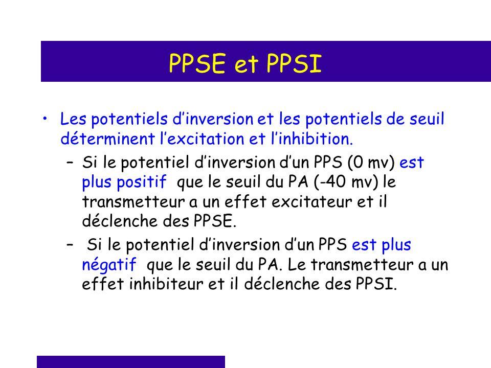 PPSE et PPSI Les potentiels d'inversion et les potentiels de seuil déterminent l'excitation et l'inhibition.