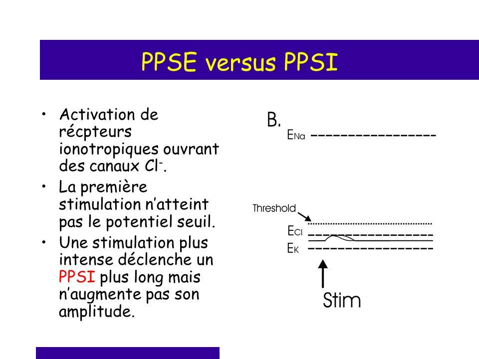 PPSE versus PPSI Activation de récpteurs ionotropiques ouvrant des canaux Cl-. La première stimulation n'atteint pas le potentiel seuil.