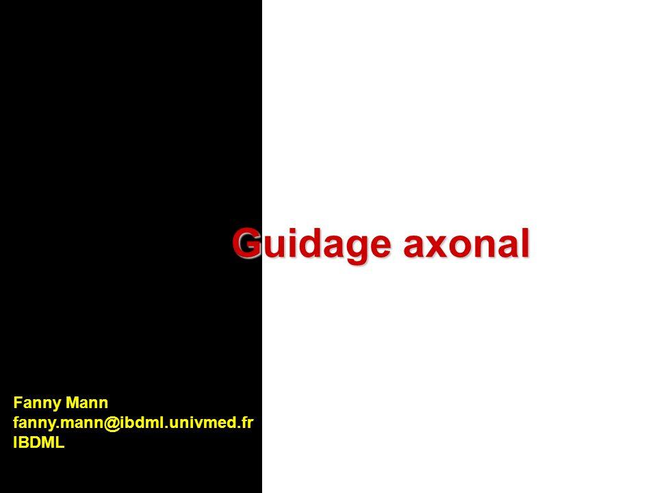 Guidage axonal Fanny Mann fanny.mann@ibdml.univmed.fr IBDML