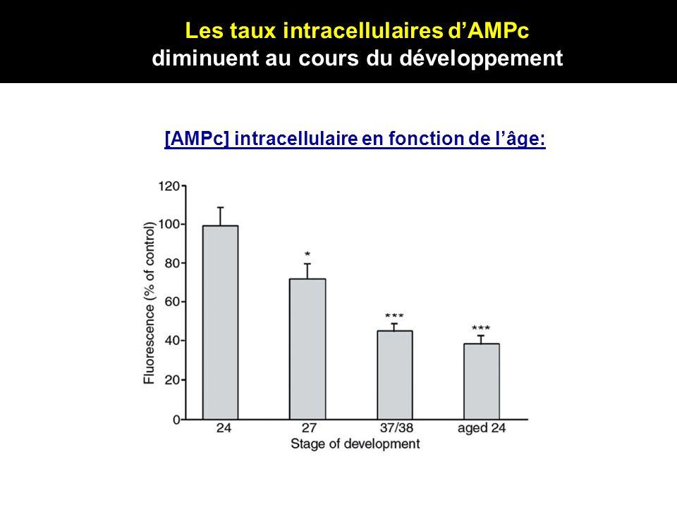 Les taux intracellulaires d'AMPc diminuent au cours du développement