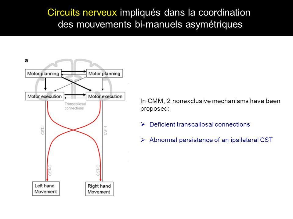 Circuits nerveux impliqués dans la coordination