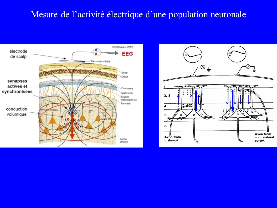 Mesure de l'activité électrique d'une population neuronale