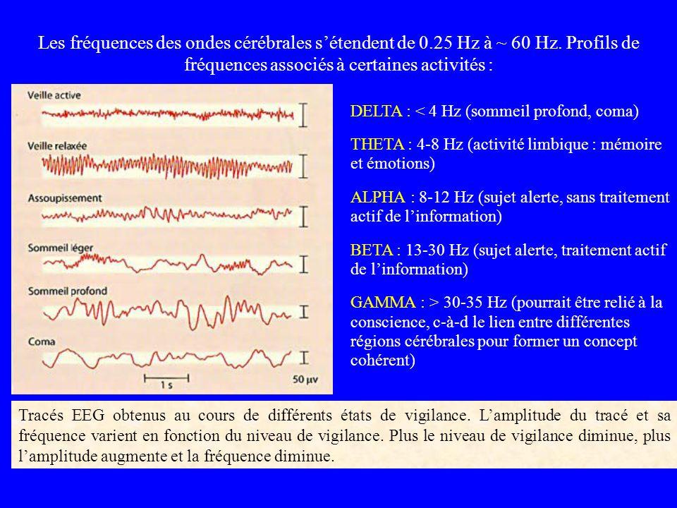 Les fréquences des ondes cérébrales s'étendent de 0. 25 Hz à ~ 60 Hz
