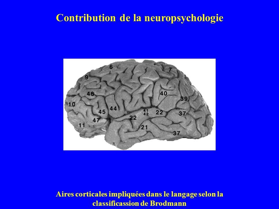 Contribution de la neuropsychologie