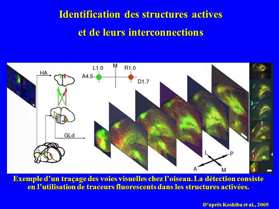 Identification des structures actives et de leurs interconnections