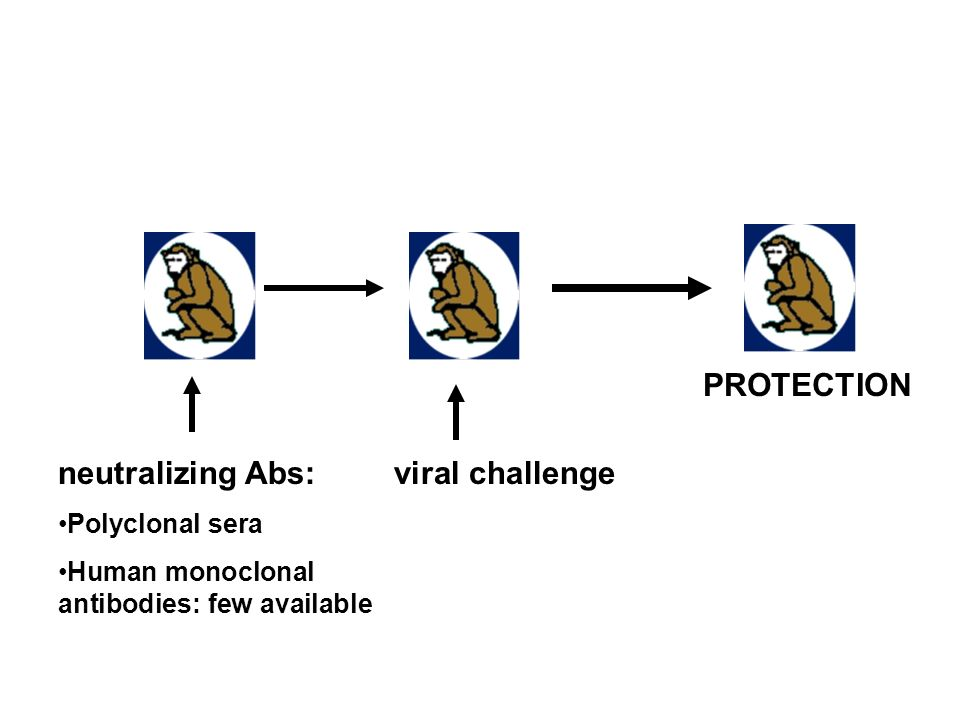PROTECTION neutralizing Abs: viral challenge Polyclonal sera