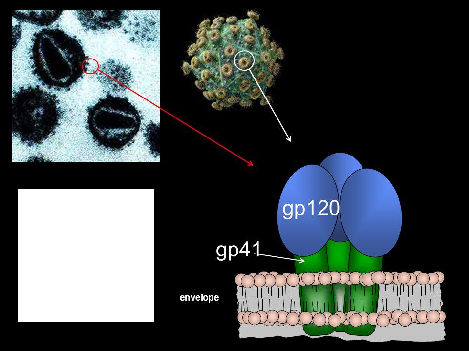 gp120 gp41 Viral envelope