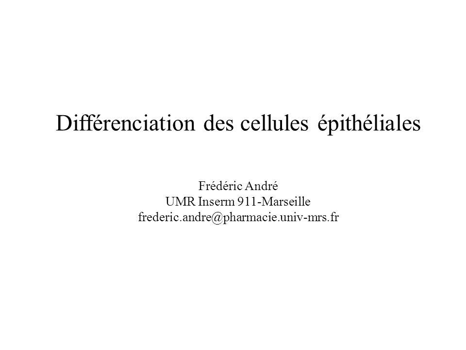Différenciation des cellules épithéliales