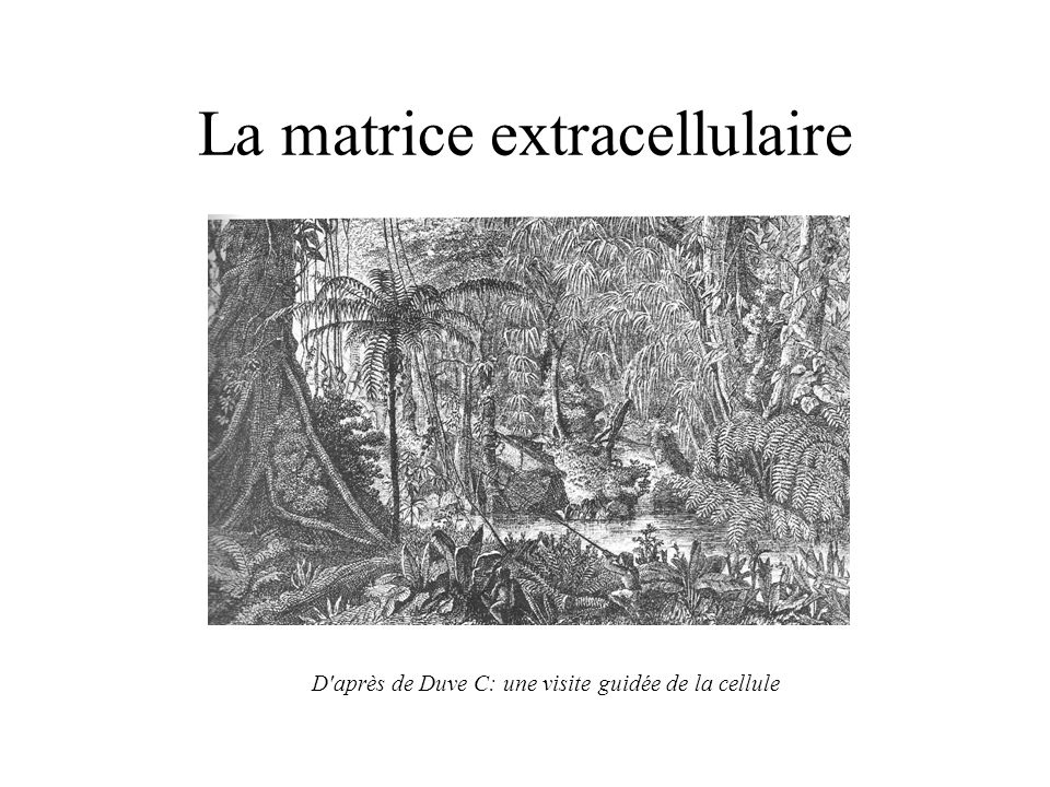 La matrice extracellulaire